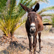 Donkey — Stock Photo #15261519