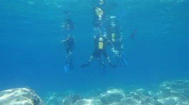 Scuba Diving — Stock Video