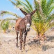 Donkey — Stock Photo #23809479