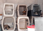 Dog Cages — Stock Photo