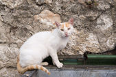 Alley cat — Stockfoto