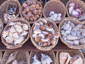 Sea shells — Stock Photo