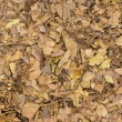 Broken Leaf Mulch — Stock Photo