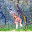Giraffe in the magic fantastic wood — Stock Photo #19257497