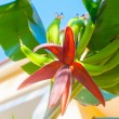 Exotic Flower — Stock Photo