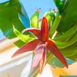 Exotic Flower — Stock Photo