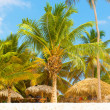 Palm tree in caribbean — Stock Photo #34859089