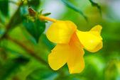 Bright yellow flower — Stock Photo