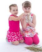 Two little girlfriends stroking rabbit — Stock Photo