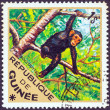 "GUINEA - CIRCA 1975: A stamp printed in Guinea from the ""Wild Animals"" issue shows a Chimpanzee (Pan troglodytes), circa 1975. — Stock Photo #11898121"