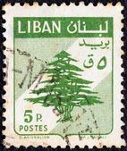 LEBANON - CIRCA 1959: A stamp printed in Lebanon shows Cedar of Lebanon, circa 1959. — Stock Photo