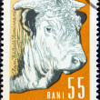 "ROMANIA - CIRCA 1962: A stamp printed in Romania from the ""Prime Farm Stock"" issue shows a bull, circa 1962. — Stock Photo"