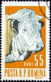 "ROMANIA - CIRCA 1962: A stamp printed in Romania from the ""Prime Farm Stock"" issue shows a bull, circa 1962. — Stock Photo"