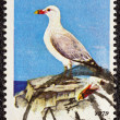 "GREECE - CIRCA 1979: A stamp printed in Greece, from the ""endangered bird species"" issue shows an Aegean seagull (Larus audouini), circa 1979. — Stock Photo"