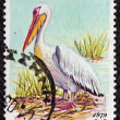 "GREECE - CIRCA 1979: A stamp printed in Greece, from the ""endangered bird species"" issue shows a Great White Pelican (Pelecanus onocrotalus), circa 1979. — Stock Photo"