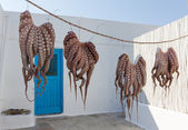 Octopuses drying in the sun in a Greek island — Stock Photo