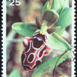 "Stock Photo: CYPRUS - CIRC1981: stamp printed in Cyprus from ""Cypriot Wild Orchids"" issue shows Ophrys kotschyi, circ1981."