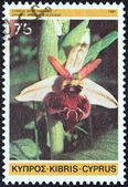 "CYPRUS - CIRCA 1981: A stamp printed in Cyprus from the ""Cypriot Wild Orchids"" issue shows Epipactis veratrifolia, circa 1981. — Stock Photo"