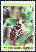 "CYPRUS - CIRCA 1981: A stamp printed in Cyprus from the ""Cypriot Wild Orchids"" issue shows Ophrys kotschyi, circa 1981. — Stock Photo"