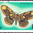 "MALDIVES - CIRCA 1975: A stamp printed in India from the ""Butterflies and Moths"" issue shows a Brahmaea wallichii moth, circa 1975. — Stock Photo"