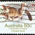 AUSTRALIA - CIRCA 1981: A stamp printed in Australia shows a Leadbeater's possum, circa 1981. — Stock Photo