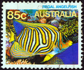 "AUSTRALIA - CIRCA 1984: A stamp printed in Australia from the ""Marine Life"" issue shows a Royal angelfish, circa 1984. — Stock Photo"