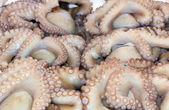 Verse octopussen op een marktkraam — Stockfoto