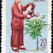 VIETNAM - CIRCA 1970: A stamp printed in North Vietnam issued for the 80th Birth anniversary of Ho Chi Minh shows Ho Chi Minh watering Kainito plant, circa 1970. - 图库照片