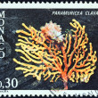 "Stock Photo: MONACO - CIRC1980: stamp printed in Monaco from ""Marine fauna"" issue shows Great Purple Gorgoni(paramuriceclavata) coral, circ1980."