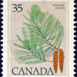 CANADA - CIRCA 1977: A stamp printed in Canada shows White pine tree cones and foliage, circa 1977. — Stock Photo