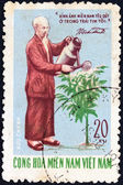 VIETNAM - CIRCA 1970: A stamp printed in North Vietnam issued for the 80th Birth anniversary of Ho Chi Minh shows Ho Chi Minh watering Kainito plant, circa 1970. — Stock Photo