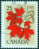 CANADA - CIRCA 1977: A stamp printed in Canada shows Sugar maple leaves, circa 1977. — Stock Photo