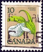 CANADA - CIRCA 1977: A stamp printed in Canada shows Franklin's lady's slipper orchid, circa 1977. — Stock Photo
