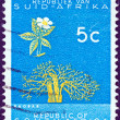 "SOUTH AFRICA - CIRCA 1961: A stamp printed in South Africa from the ""Republic"" issue shows a Baobab tree, circa 1961. — Stock Photo"
