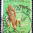 """SOUTH AFRICA - CIRCA 1961: A stamp printed in South Africa from the """"Republic"""" issue shows Maize and a factory, circa 1961. — Stock Photo"""