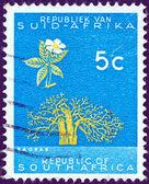 """Sud africa - intorno al 1961: un timbro stampato in sud africa dalla questione """"repubblica"""" indica un albero di baobab, intorno al 1961. — Foto Stock"""