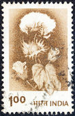 INDIA - CIRCA 1979: A stamp printed in India shows a cotton plant, circa 1979. — Stock Photo