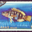 "GREECE - CIRCA 1981: A stamp printed in Greece from the ""Butterflies, shells and fishes"" issue showing a Perka fish (serranus scriba), circa 1981. — Stock Photo"