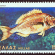 "GREECE - CIRC1981: stamp printed in Greece from ""Butterflies, shells and fishes"" issue shows Synagridfish (dentex dentex), circ1981. — Foto de stock #13604774"