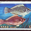"GREECE - CIRCA 1981: A stamp printed in Greece from the ""Butterflies, shells and fishes"" issue shows a pair of Skaros fishes (Euscarus Cretensis), circa 1981. — Stock Photo"