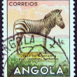 "ANGOLA - CIRCA 1953: A stamp printed in Angola from the ""Angolan fauna"" issue shows a zebra, circa 1953. — Stock Photo"