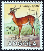 """ANGOLA - CIRCA 1953: A stamp printed in Angola from the """"Angolan fauna"""" issue shows an Impala, circa 1953. — Stock Photo"""