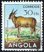 """Angola - intorno al 1953: un timbro stampato in angola la rivista """"fauna angolana"""" indica un taurotragus oryx, intorno al 1953. — Foto Stock"""