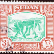 SUDAN - CIRCA 1951: A stamp printed in Sudan shows Nuba wrestlers, circa 1951. - ストック写真