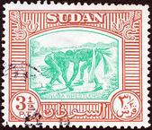 SUDAN - CIRCA 1951: A stamp printed in Sudan shows Nuba wrestlers, circa 1951. — Stock Photo