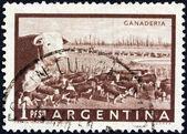 アルゼンチン - 1954年年頃: アルゼンチンで印刷スタンプ 1954年年頃の牛を示しています. — ストック写真