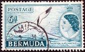 Bermudas - circa 1953: un sello impreso en las bermudas muestra aves tropicales de cola blanca y la reina isabel ii, circa 1953. — Foto de Stock