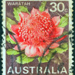 "AUSTRALIA - CIRCA 1968: A stamp printed in Australia from the ""State floral emblems"" issue shows Waratah (New South Wales), circa 1968. — Stock Photo"