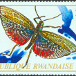 "RWANDA - CIRCA 1973: A stamp printed in Rwanda from the ""Rwanda Insects"" issue shows a Phymateus brunneri grasshopper, circa 1973. — Stock Photo #14866821"