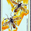 "RWANDA - CIRCA 1973: A stamp printed in Rwanda from the ""Rwanda Insects"" issue shows a pair of Diopsis fumipennis, circa 1973. — Stock Photo"